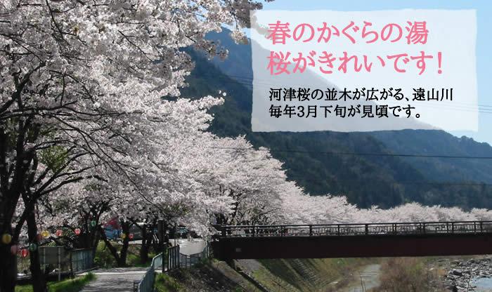 春のかぐらの湯 桜がきれいです!
