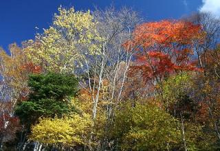 しらびそ高原の紅葉